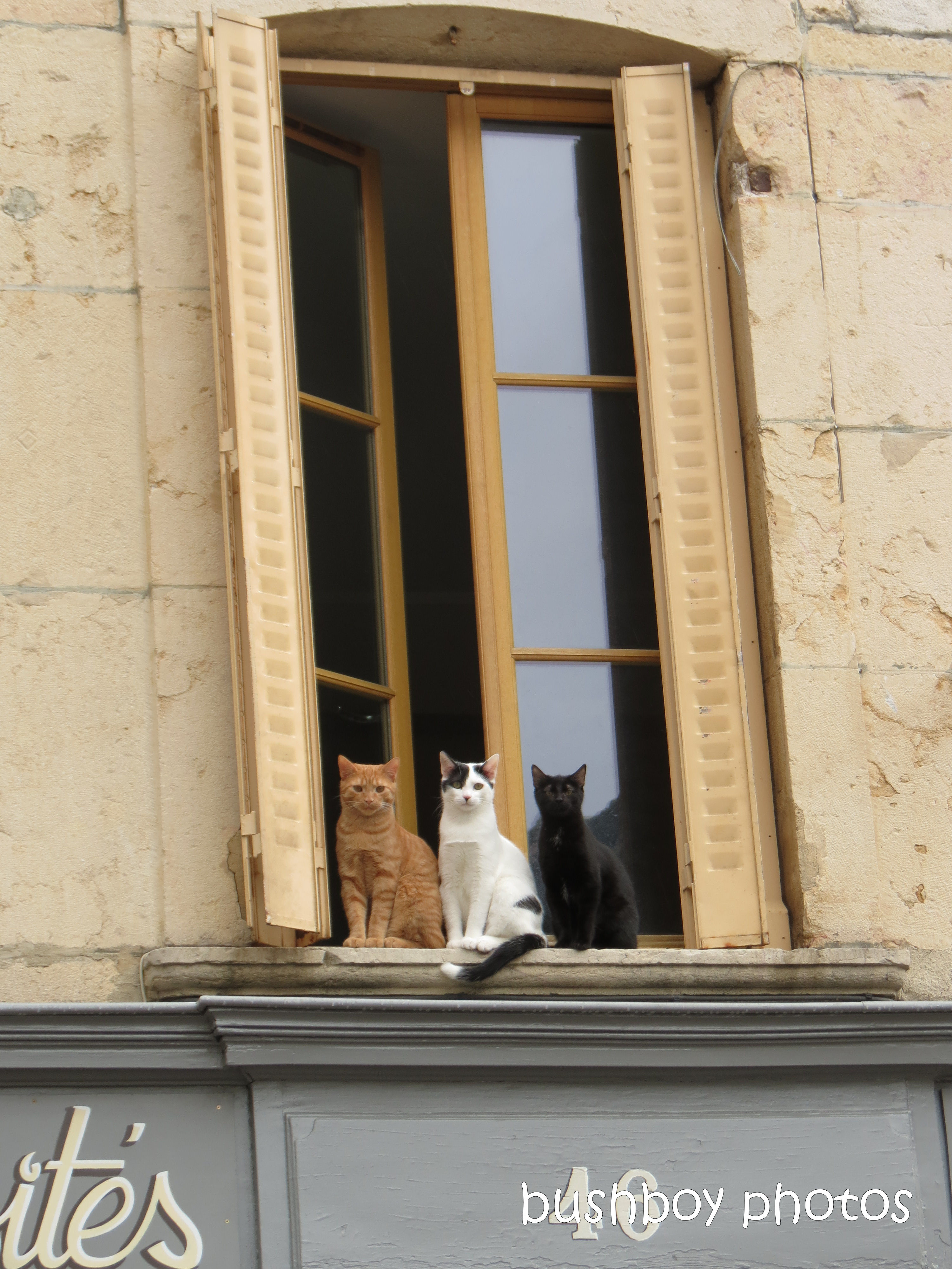 190410_blog_challenge_pick_a_word_copycat_cats_beaune_france