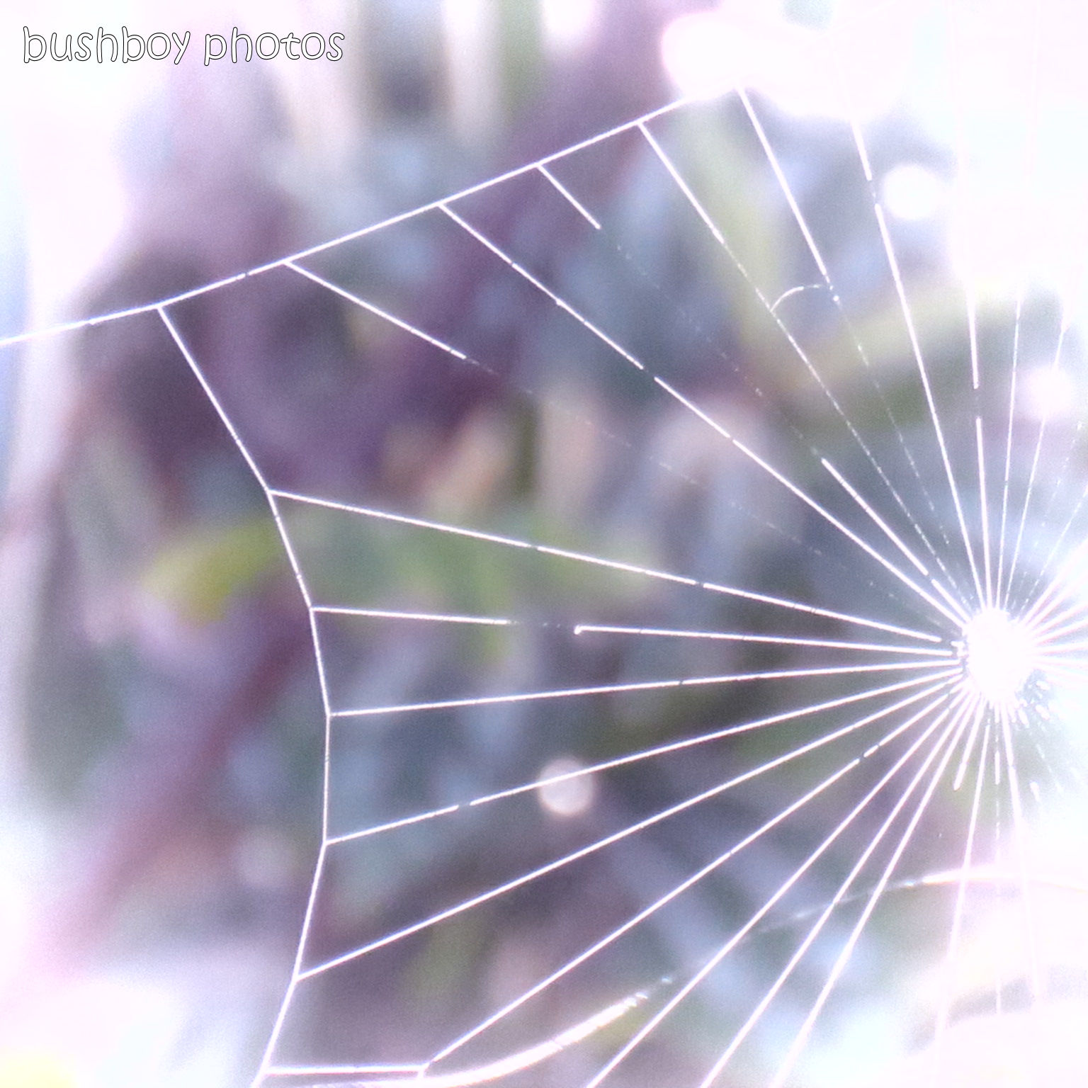 190410_blog_challenge_spider_web_changed_art