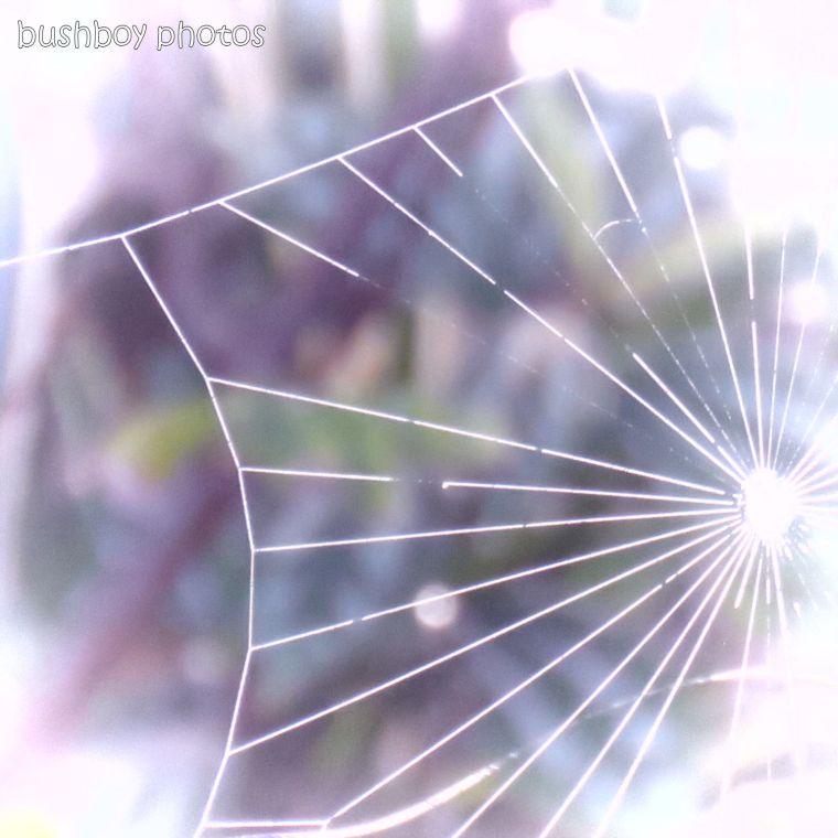 190410_blog_challenge_spider_web_changed_art