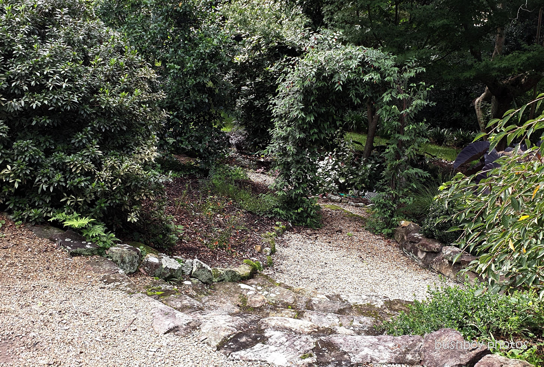 190410_blog_challenge_which_way_springwood_garden