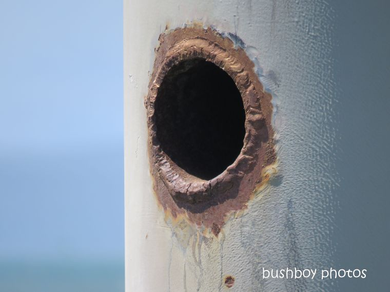 rust_hole_pier_named_macleay_island_march 2019