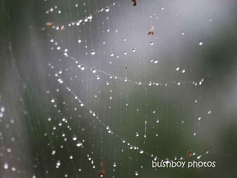 spider_web_water_drops_named_caniaba_march 2019