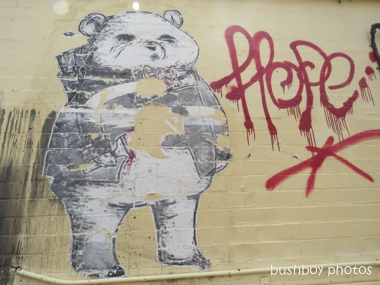 street_art2_bear_named_toowoomba_jan 2019