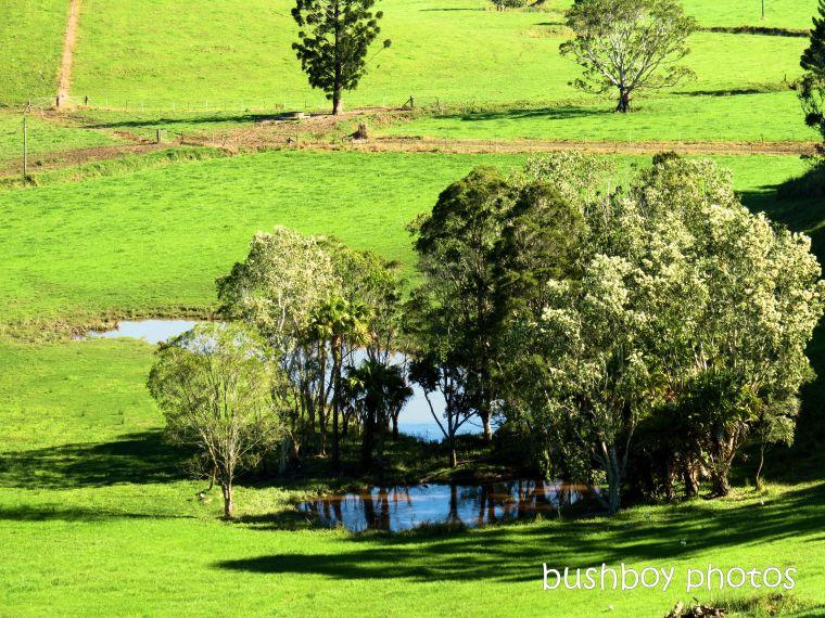 190508_blog_challenge_verdant_murwillumbah_dam_landscape_trees