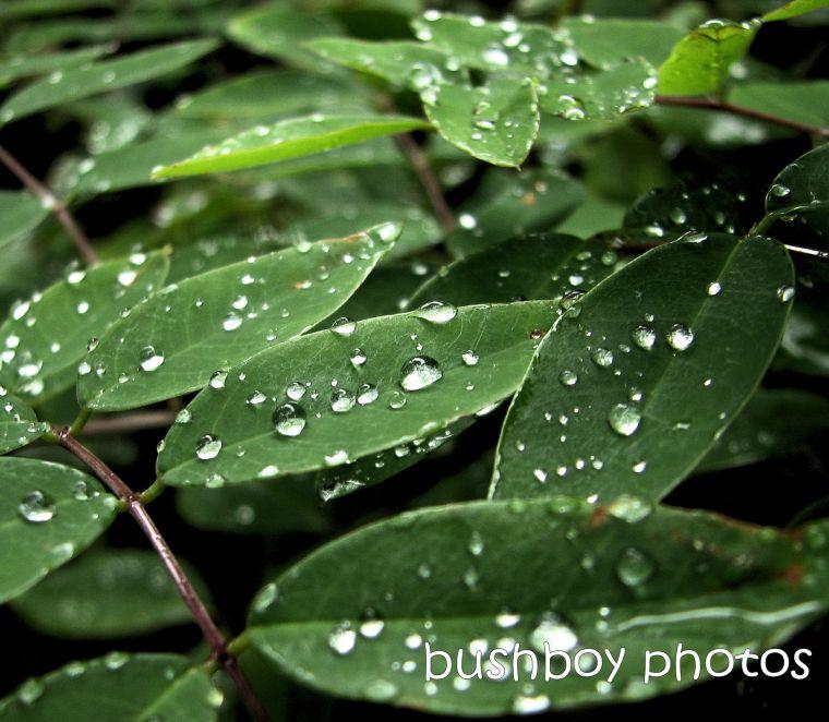 190509_blog_challenge_raindrops_wisteria