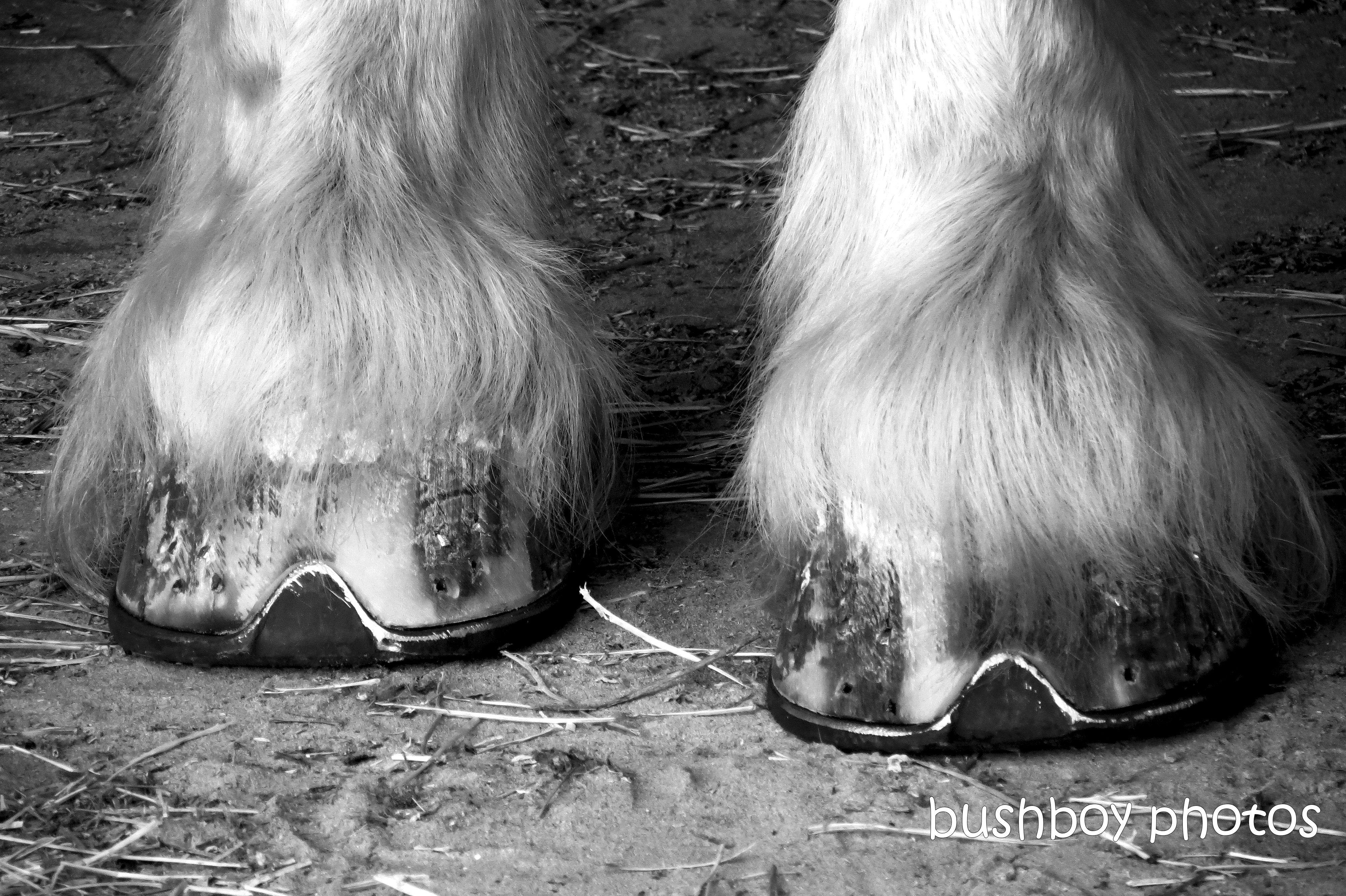 190510_blog_challenge_blackandwhite_feet_horse
