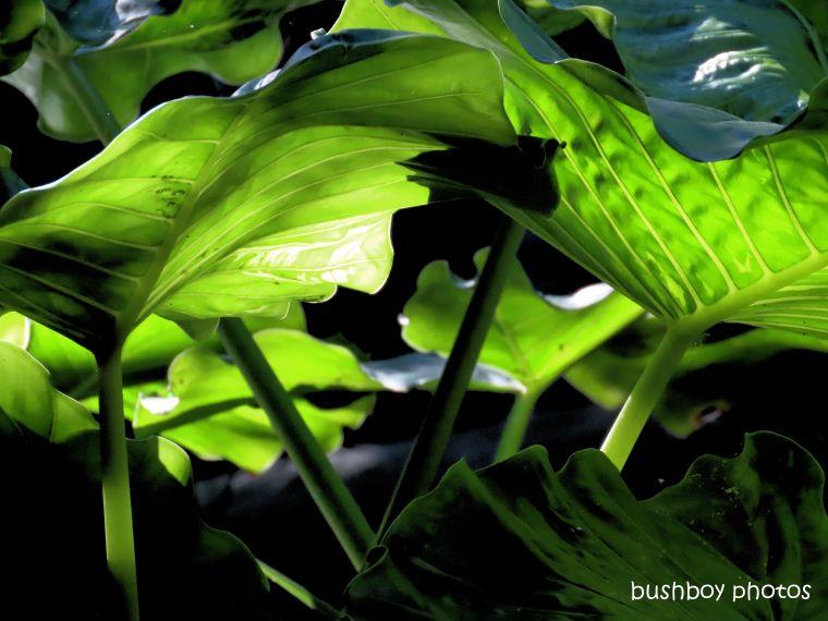 190604_blog_challenge_green_cunjevoi