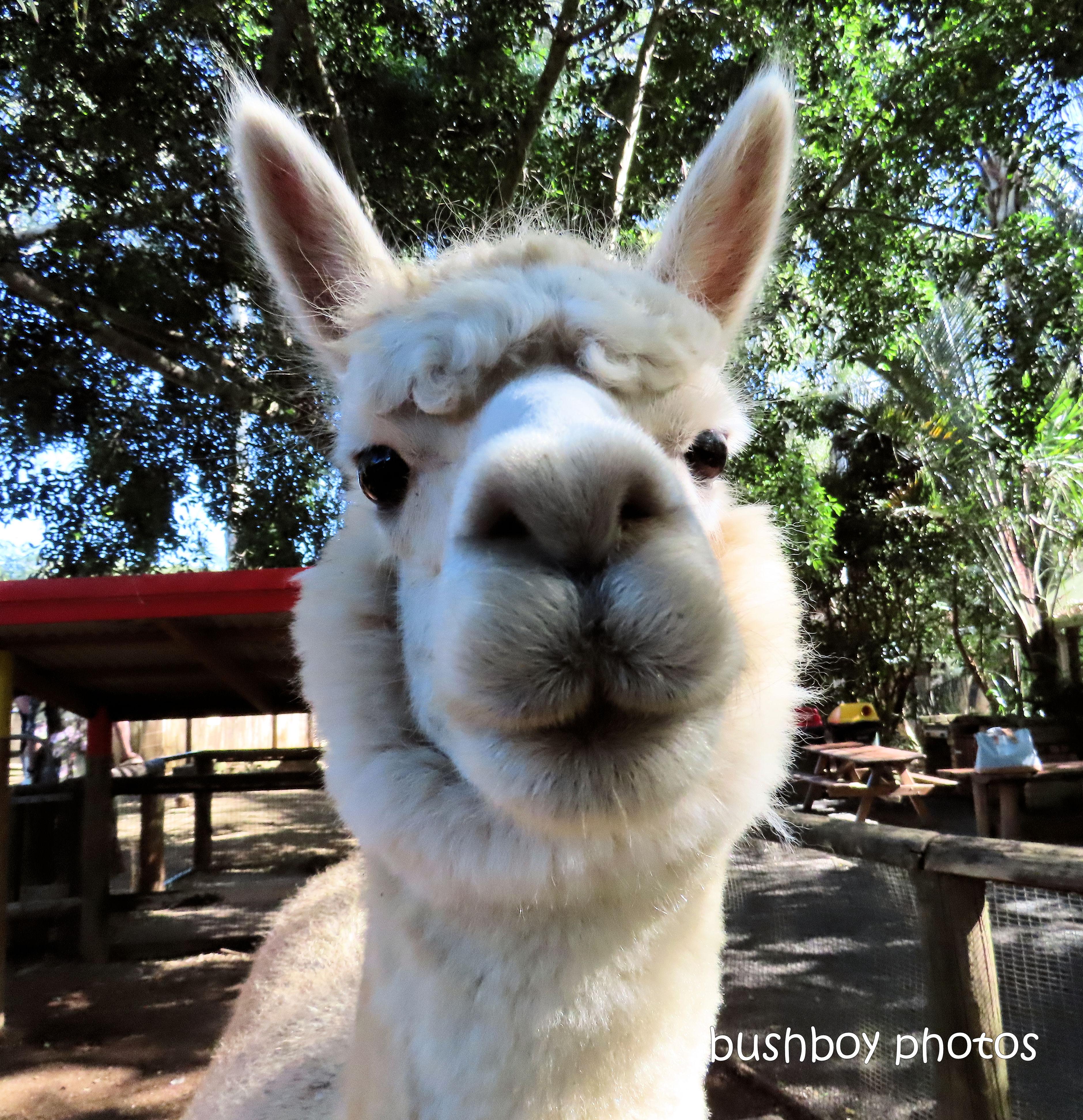 190605_blog_challenge_smile_llama