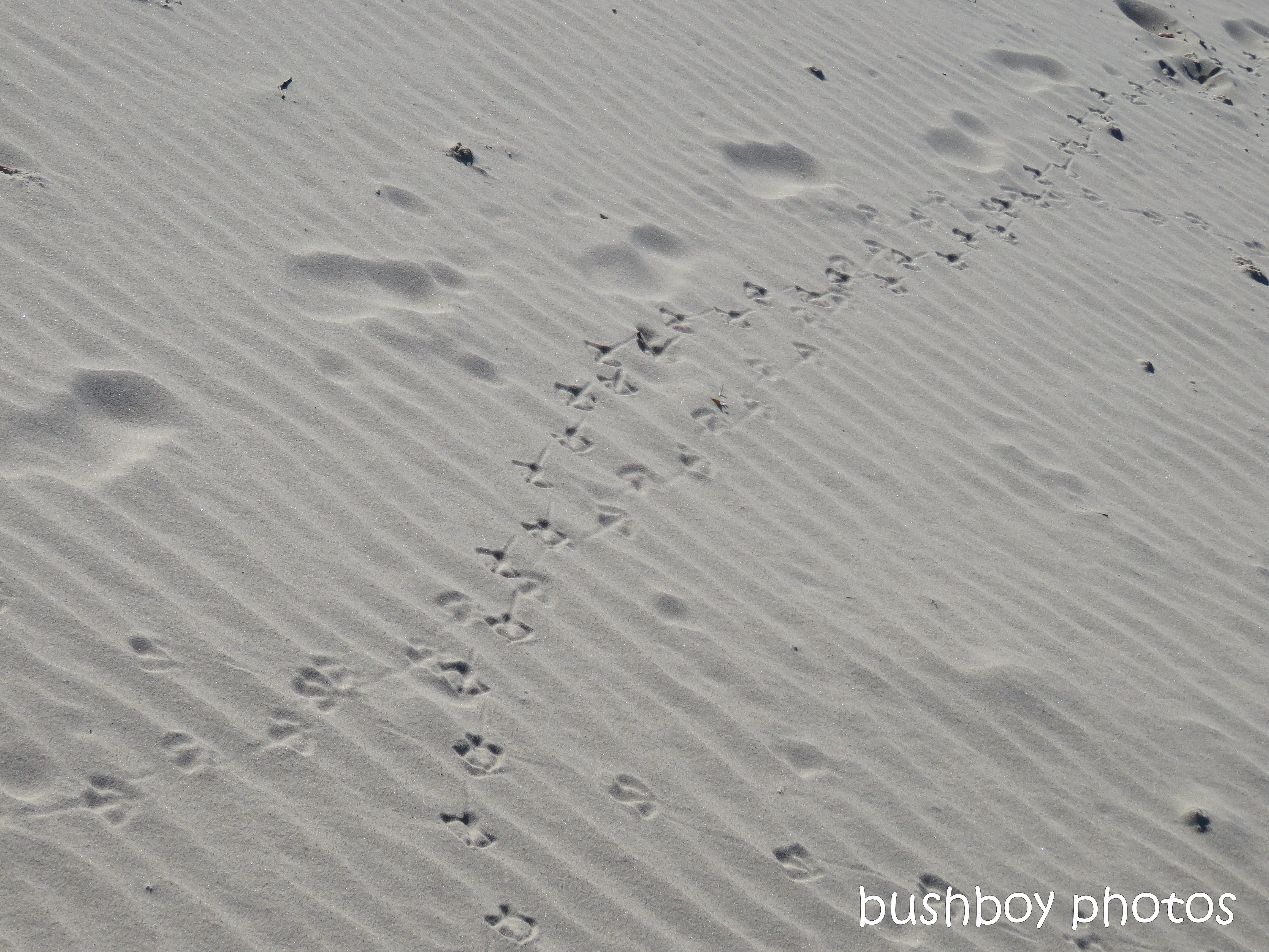 190607_blog_challenge_which_way_bird_tracks_beach2