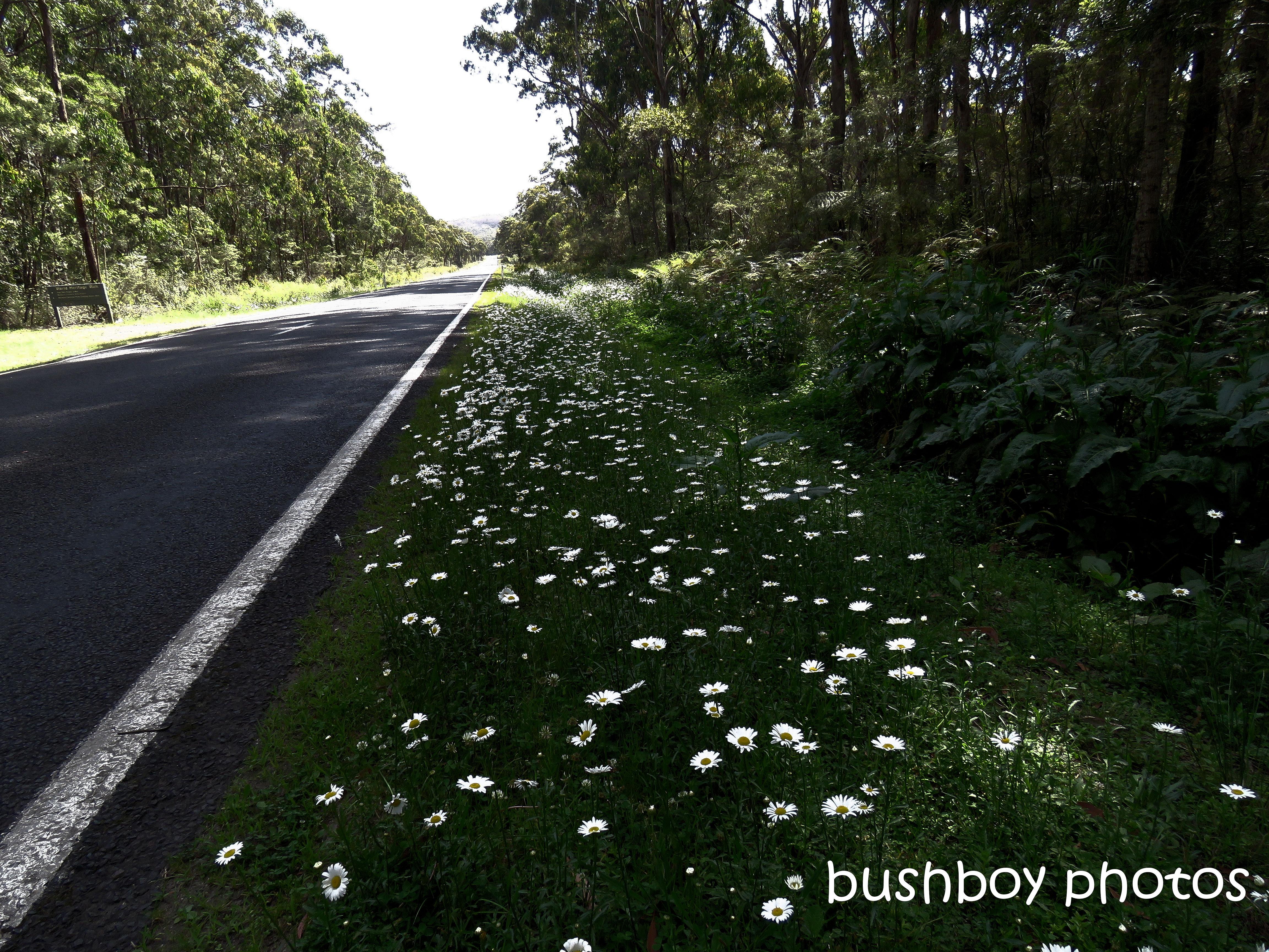 190611_blog_challenge_road_gwydir_highway_jackadgery