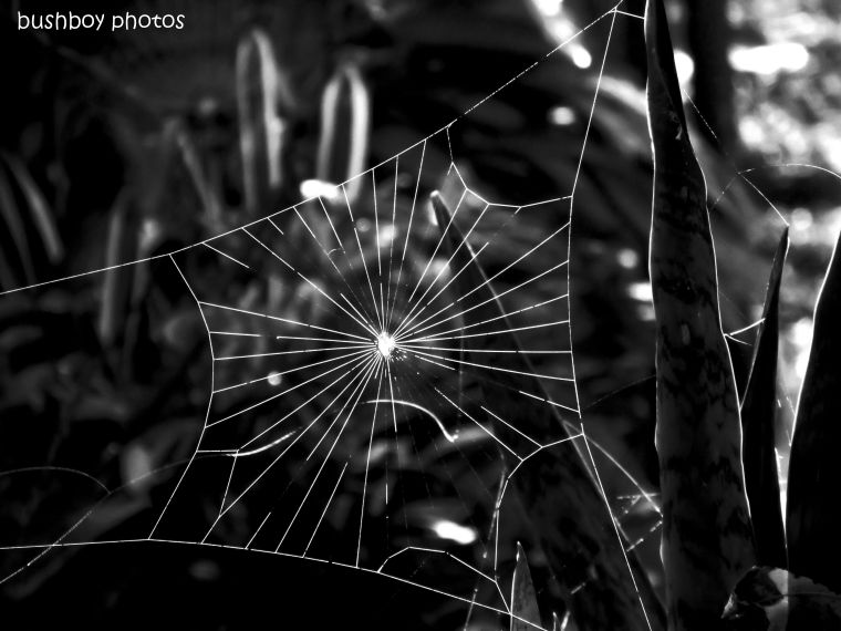 190628_blog_challenge_blackandwhite_lines_angles_spider_web1
