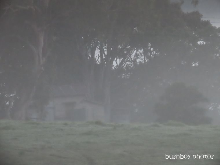 shed_old_fog_morning_named_caniaba_may 2019