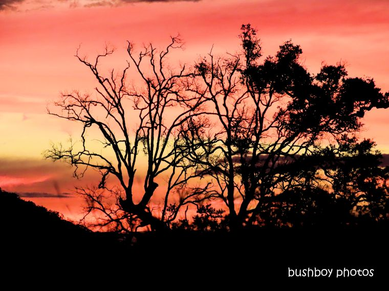 sunset_red_bare_tree_named_caniaba_may 2019