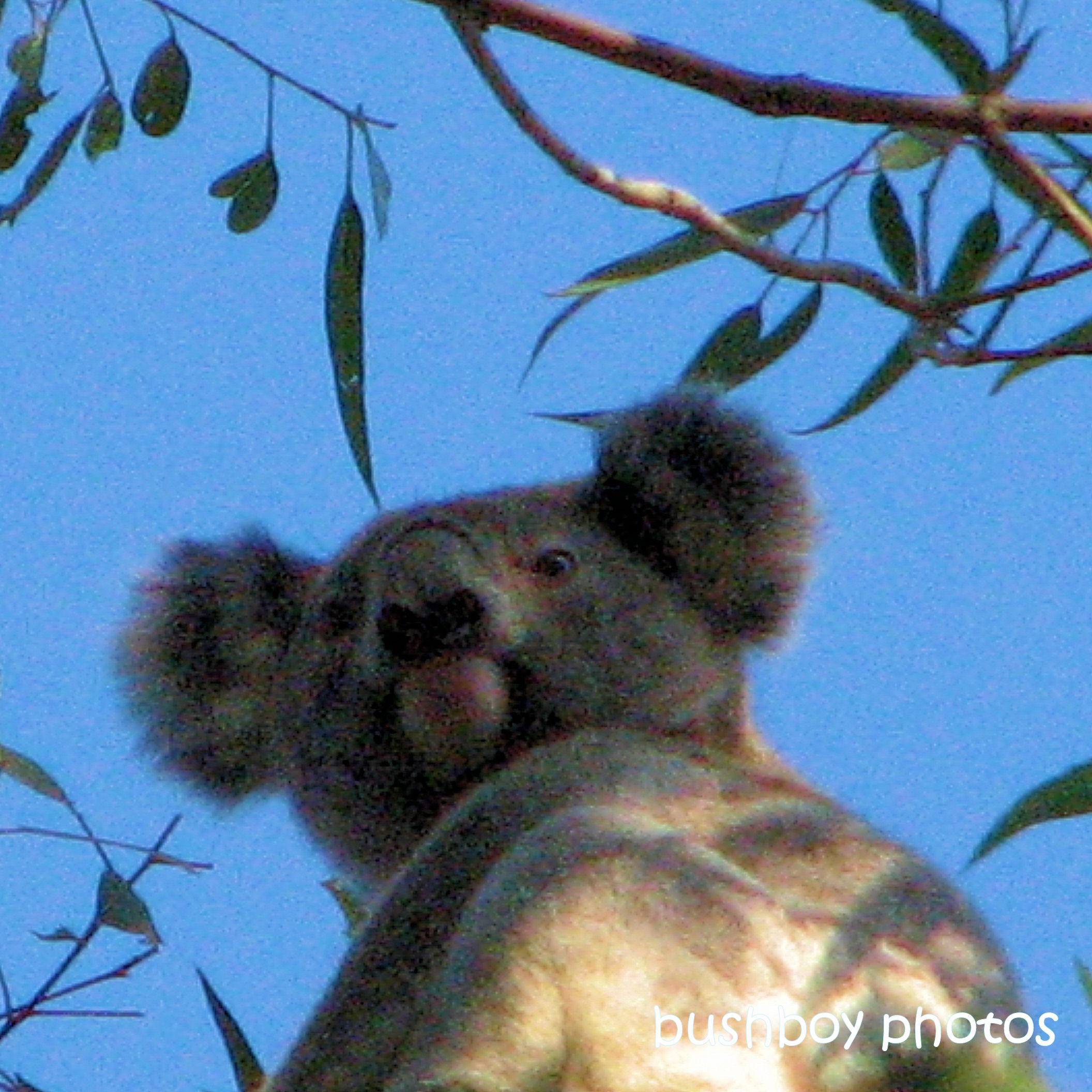 190703_blog_challenge_blue_koala