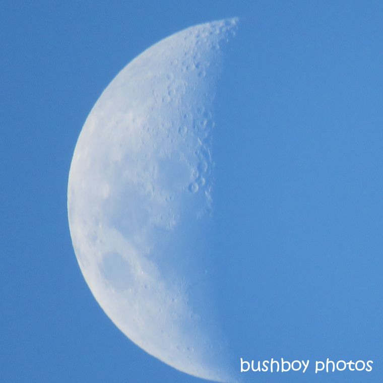 190709_blog_challenge_blue_moon3