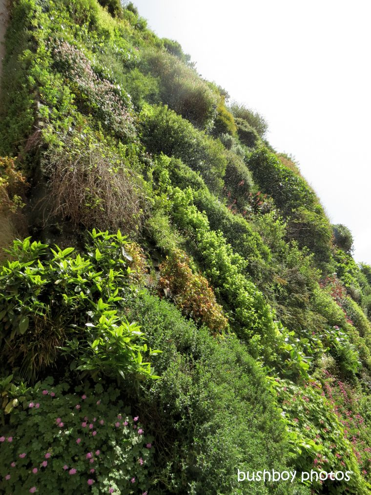 190709_blog_challenge_wall_madrid_caiaxa_vertical_garden1