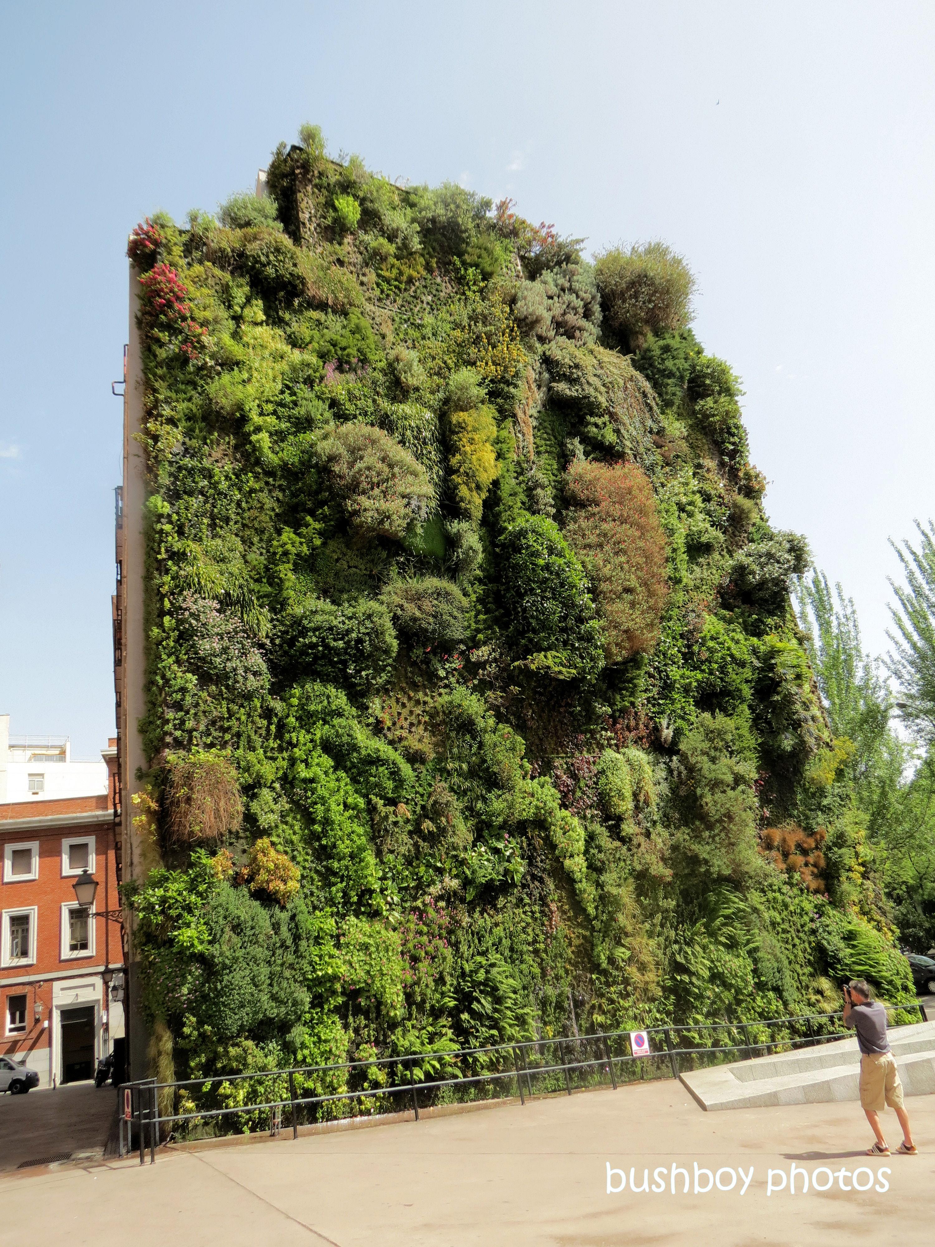 190709_blog_challenge_wall_madrid_caiaxa_vertical_garden2