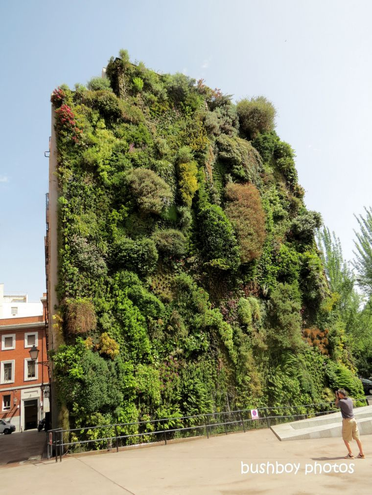 190709_blog_challenge_wall_madrid_caiaxa_vertical_garden2