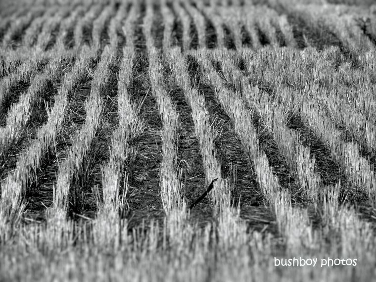 190710_blog_challenge_mid_week_monochrome_field_stubble