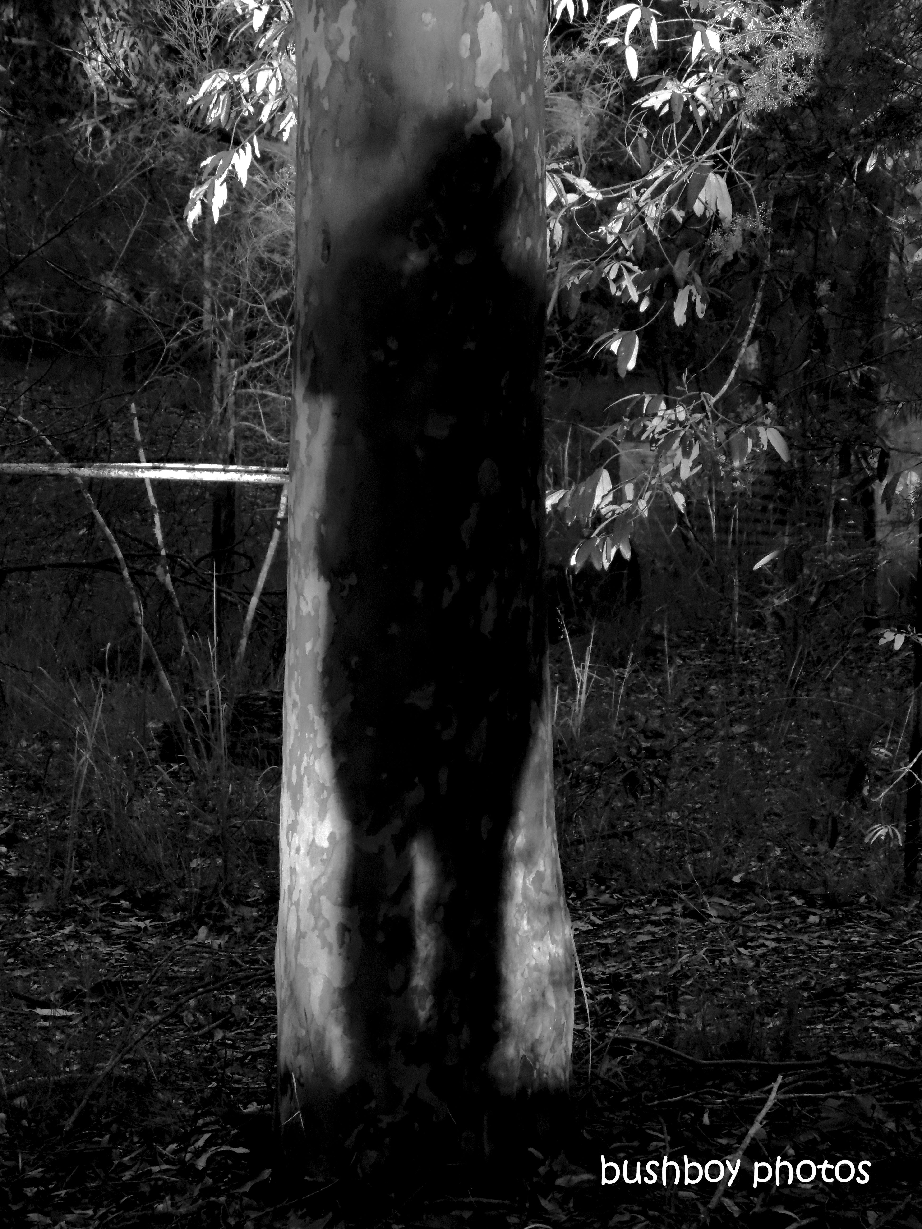 190712_blog_challenge_blackandwhite_shadows_tree_me2