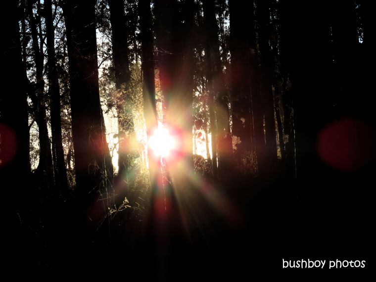 190713_blog_challenge_six_word_saturday_sunset_forest_durranbah