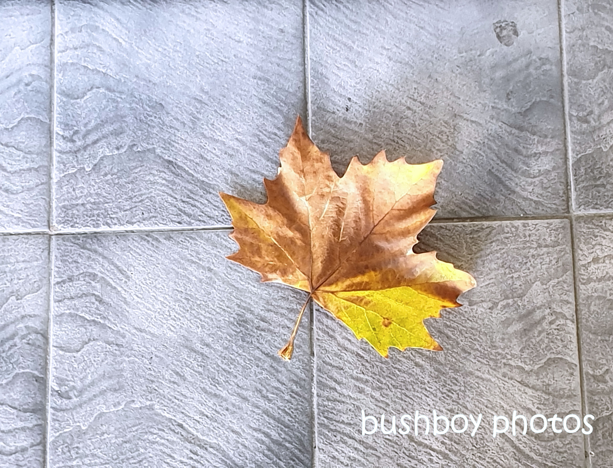190730_blog_challenge_brick_tile_floor_tile_leaf
