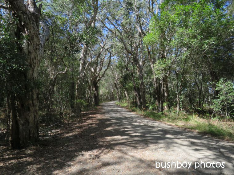 190730_blog_challenge_which_way_evans_head_bush_track