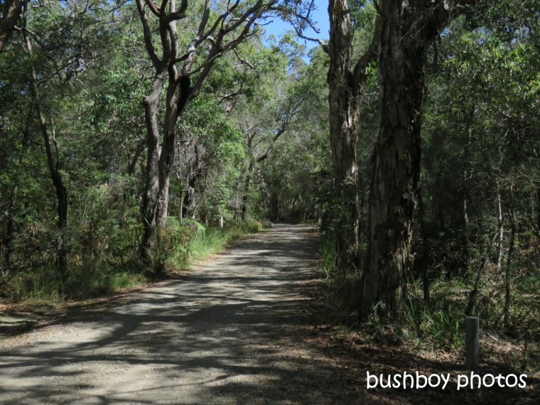 190730_blog_challenge_which_way_evans_head_bush_track2
