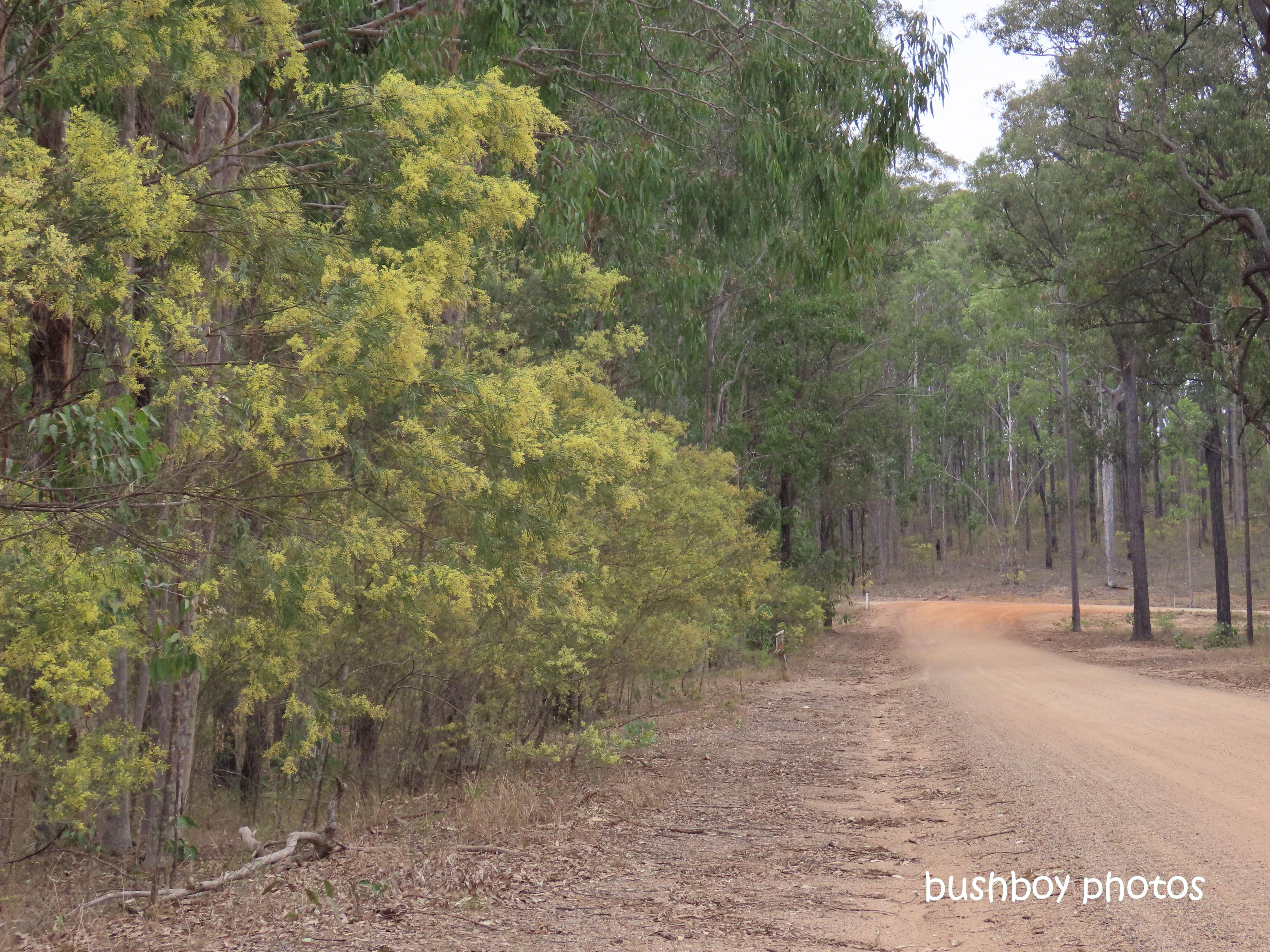190808_blog_challenge_which_way_wattles_duroux_road