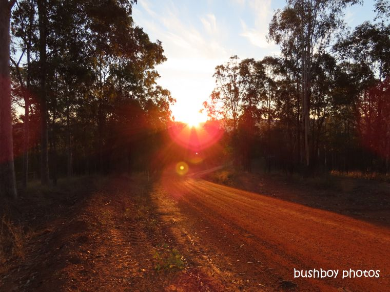 sunset_jackadgery_purgatory_creek_road_named_july 2019