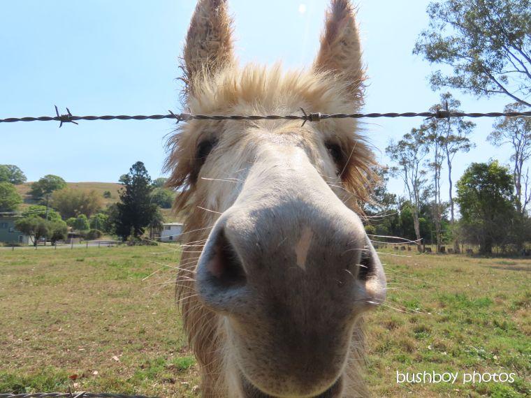 190919_blog_challenge_fuzzy_donkey1