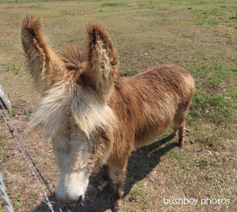 190919_blog_challenge_fuzzy_donkey2