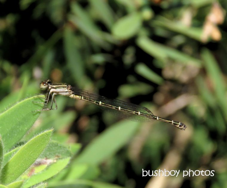 190923_blog_challenge_macro_monday_mayfly