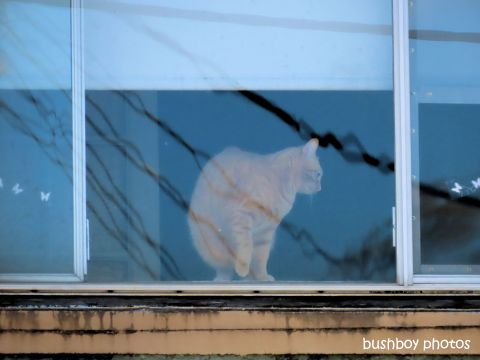 cat_window_named_kyogle_august 2019