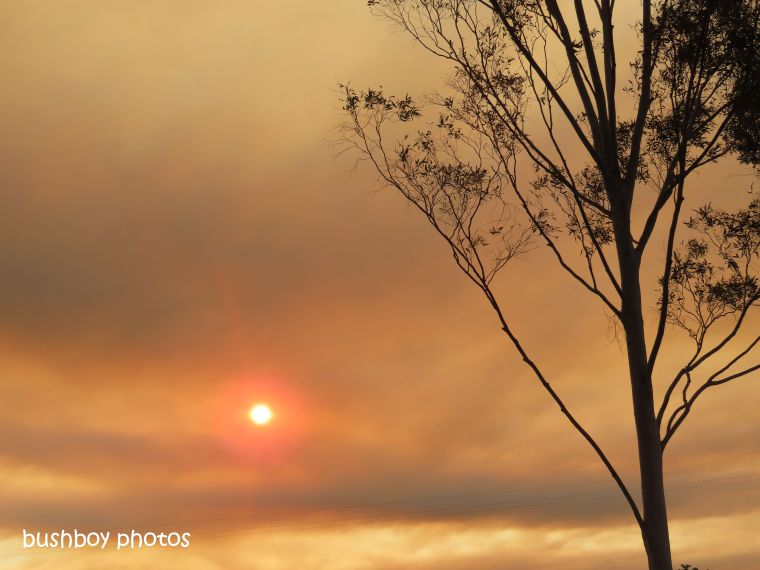 early_sky_sihouettte_sunset_fire_named_caniaba_sept 2019