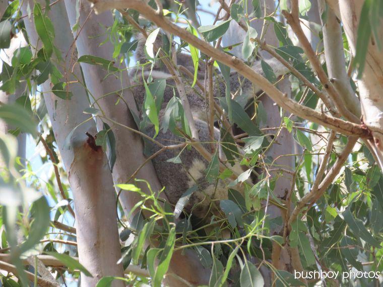 191003_blog_challenge_scratch_koala1