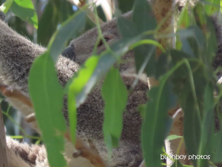 191003_blog_challenge_scratch_koala2