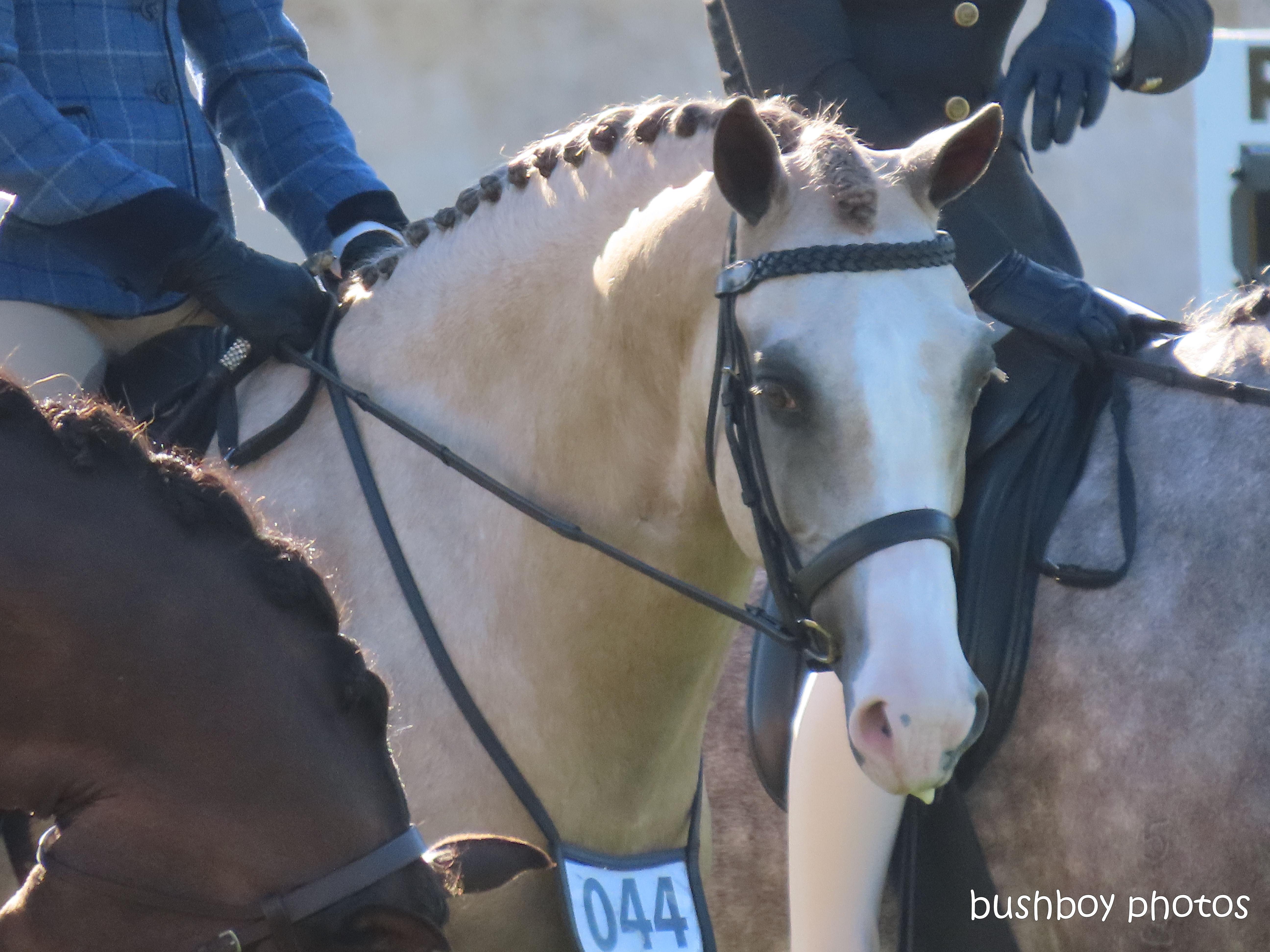 191004_blog_challenge_number_horse2