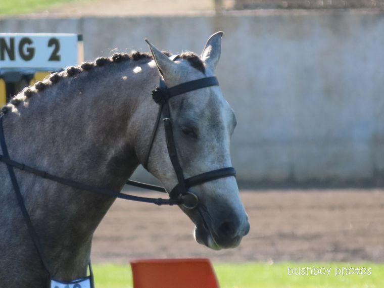 191004_blog_challenge_number_horse3