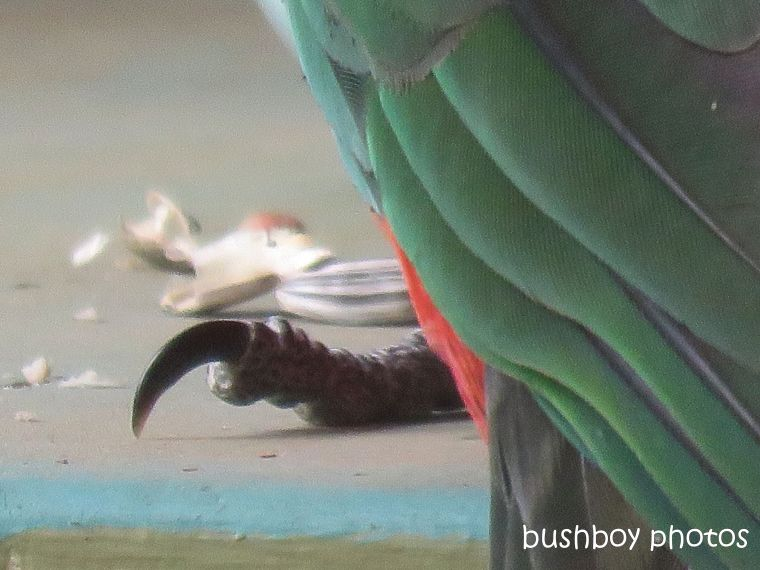 191007_blog_challenge_macro_monday_king_parrot3