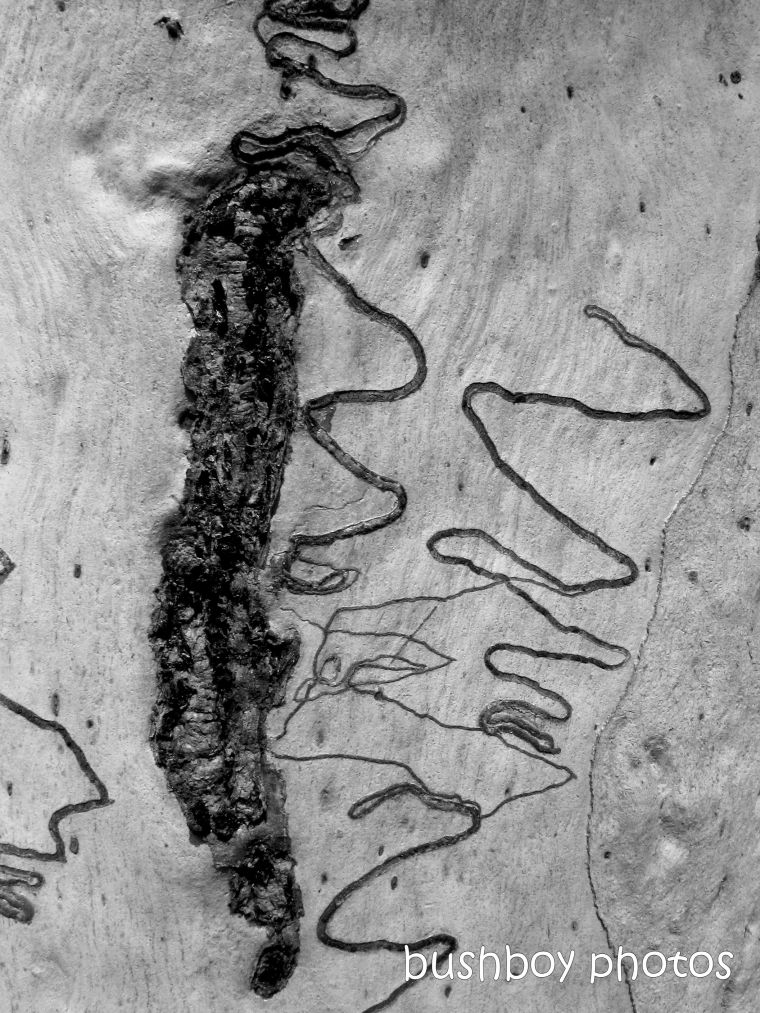 191011_blog_challenge_blackandwhite_tree_art_bark_scribbly