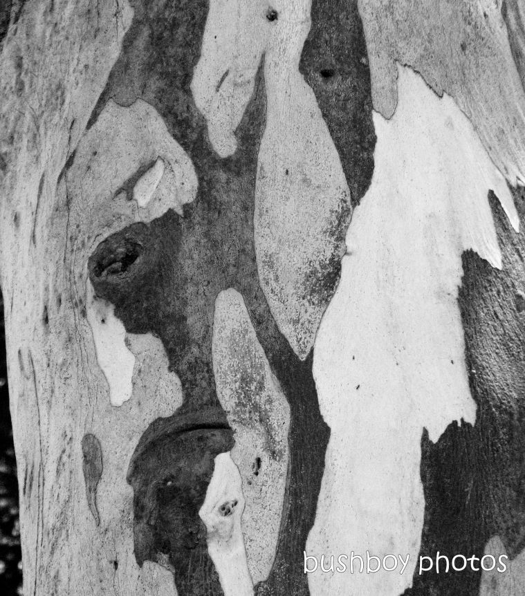 191011_blog_challenge_blackandwhite_tree_art_bark_spotted_gum