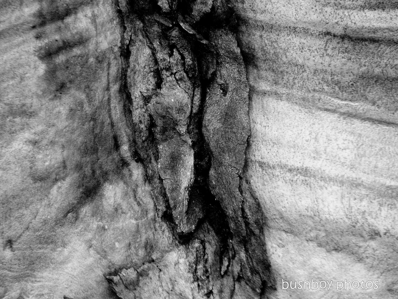 191011_blog_challenge_blackandwhite_tree_art_bark_spotted_gum_close
