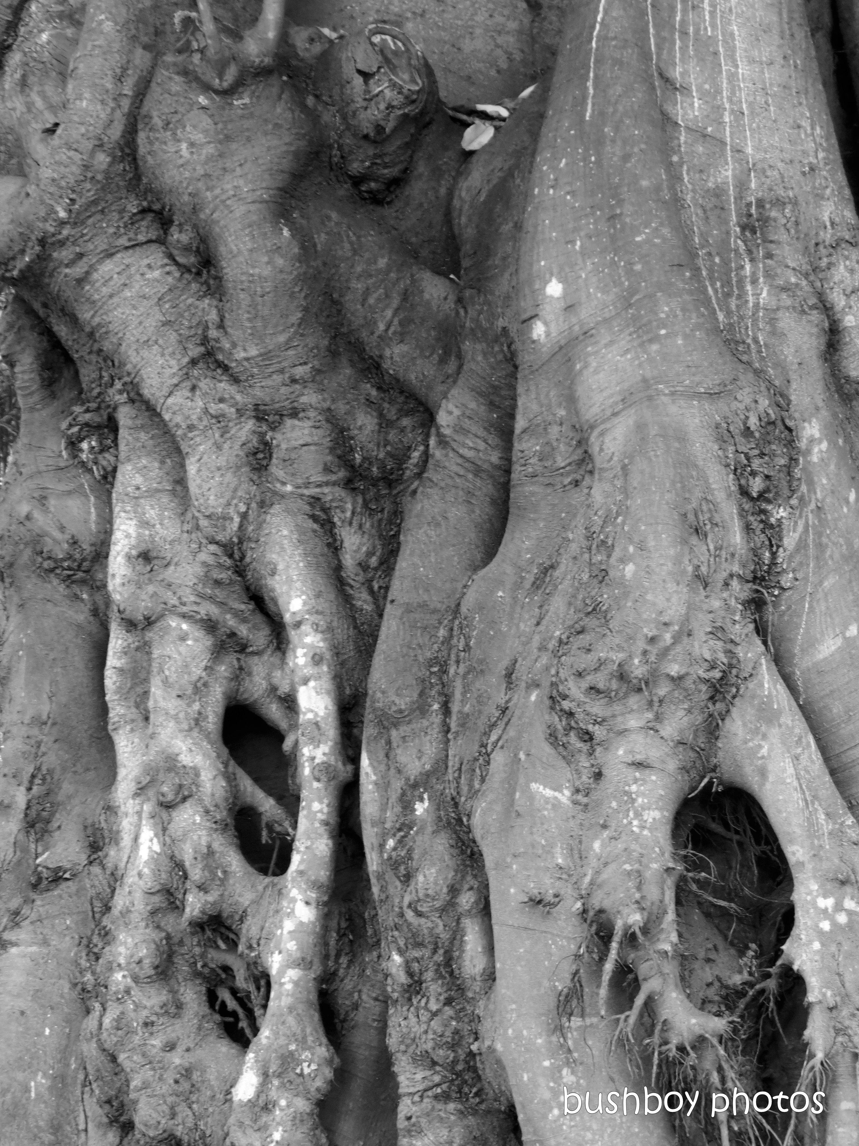 191011_blog_challenge_blackandwhite_tree_art_fig