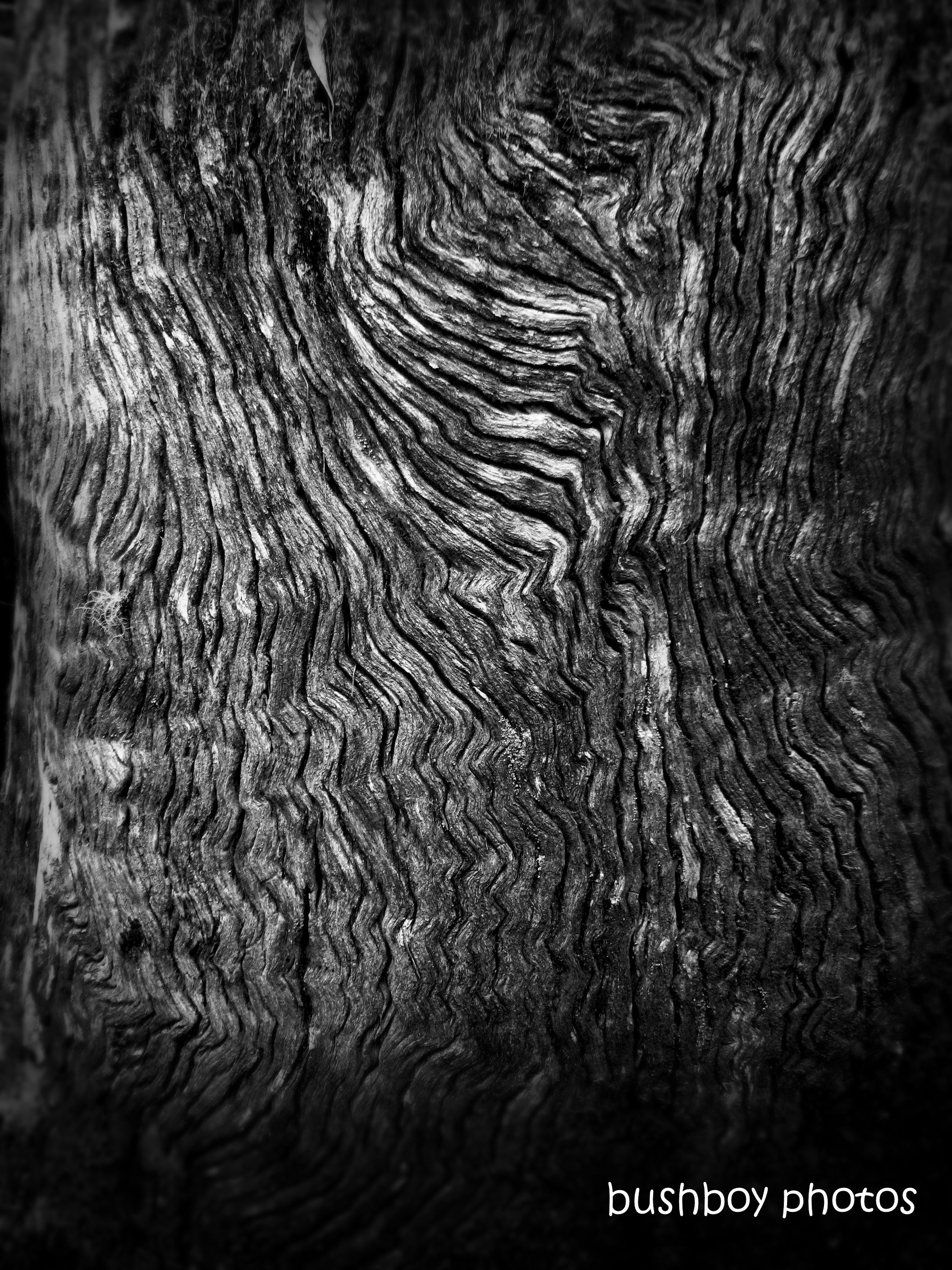 191011_blog_challenge_blackandwhite_tree_art_wood_pattern