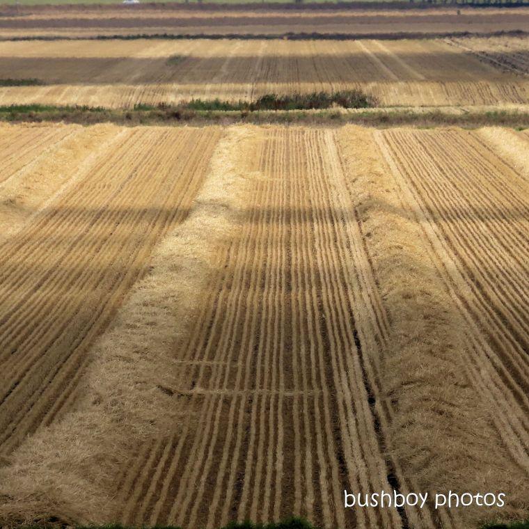 191020_blog_challenge_square_lines_field_harvest