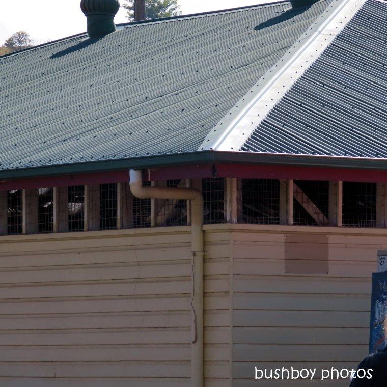 191021_blog_challenge_square_lines_roof_shed_lismore