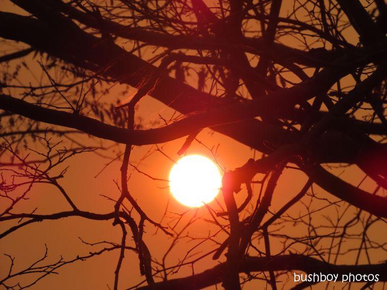 191023_blog_challenge_sunset_tree_fire_orange