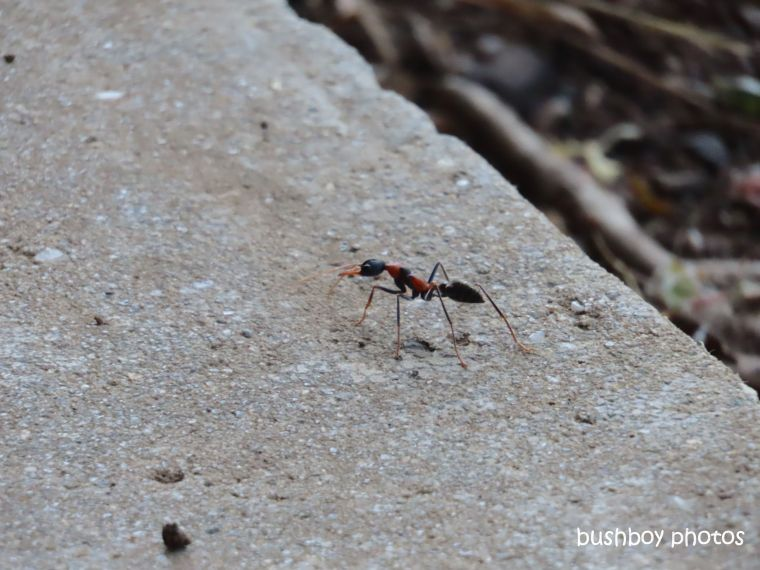 ant_verandah_named_caniaba_sept 2019
