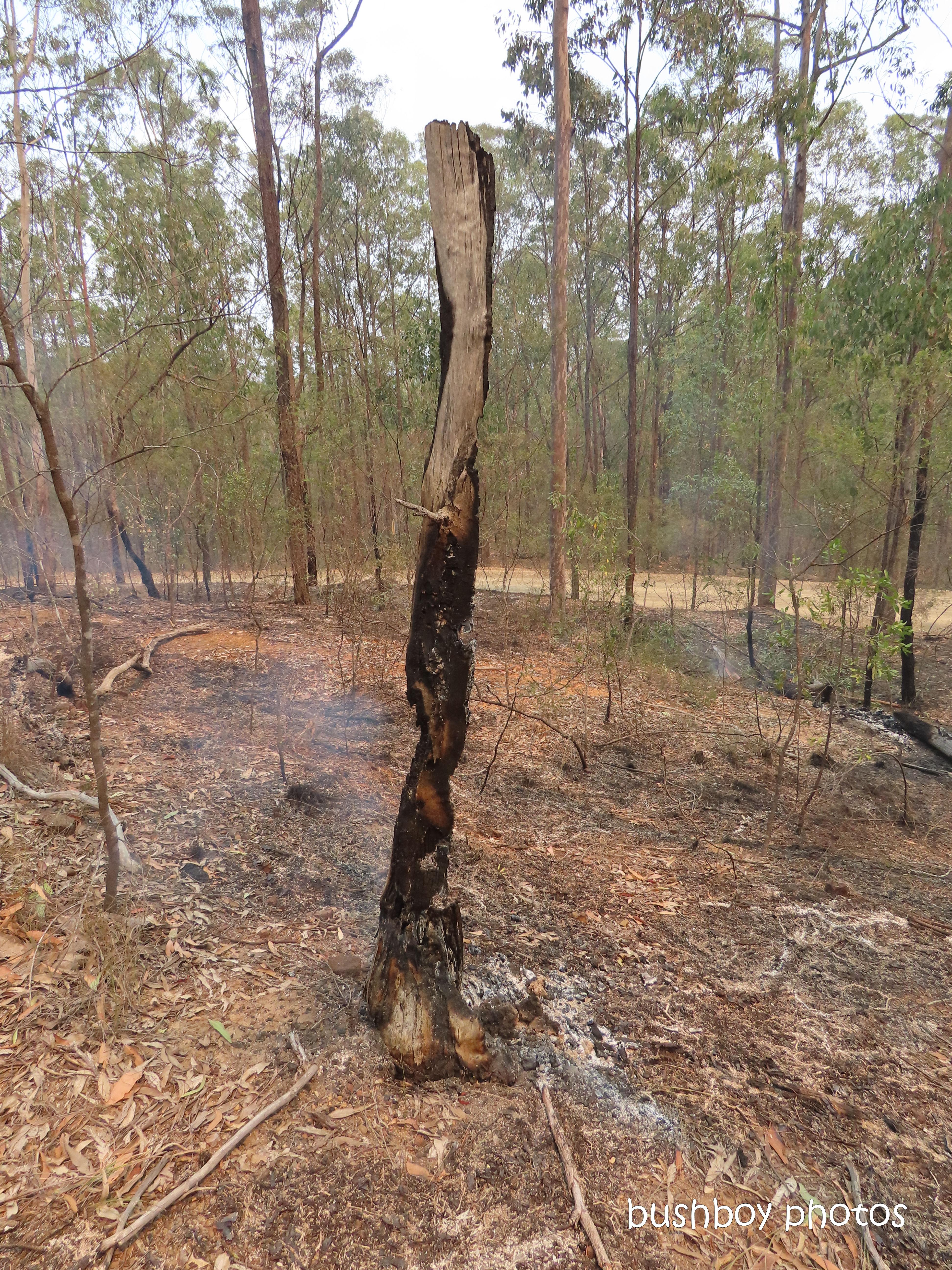 fire_old_tree_smoke_named_home_jackadgery_oct 2019